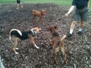 Annandale Dog Park