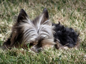 pet proofing your yard